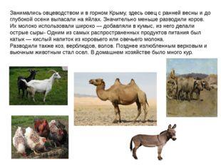 Занимались овцеводством и в горном Крыму, здесь овец с ранней весны и до глуб