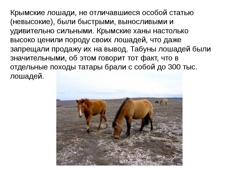 Крымские лошади, не отличавшиеся особой статью (невысокие), были быстрыми, вы...