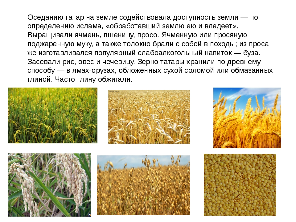 Оседанию татар на земле содействовала доступность земли — по определению исла...
