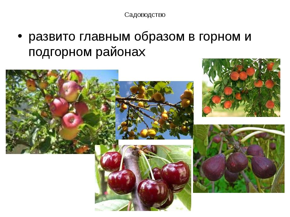 Садоводство развито главным образом в горном и подгорном районах