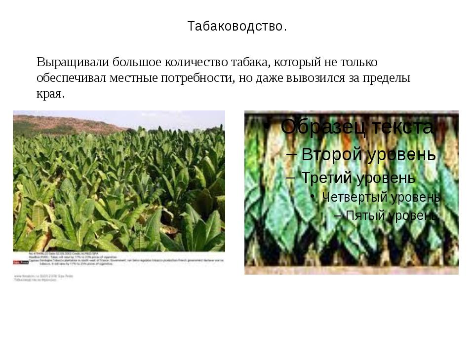 Табаководство. Выращивали большое количество табака, который не только обеспе...
