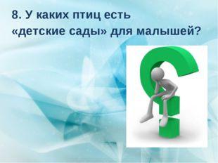 8. У каких птиц есть «детские сады» для малышей?