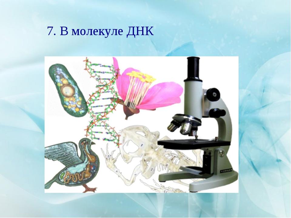7. В молекуле ДНК