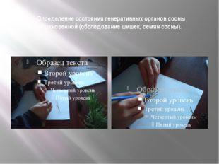 Определение состояния генеративных органов сосны обыкновенной (обследование