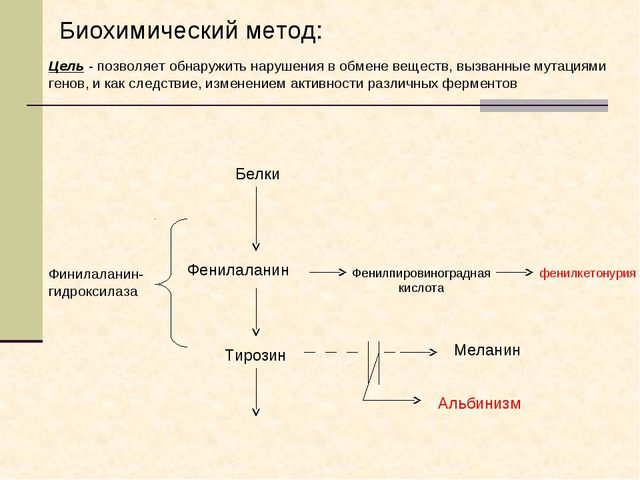 Финилаланин-гидроксилаза Белки Фенилаланин Тирозин Фенилпировиноградная кисло...
