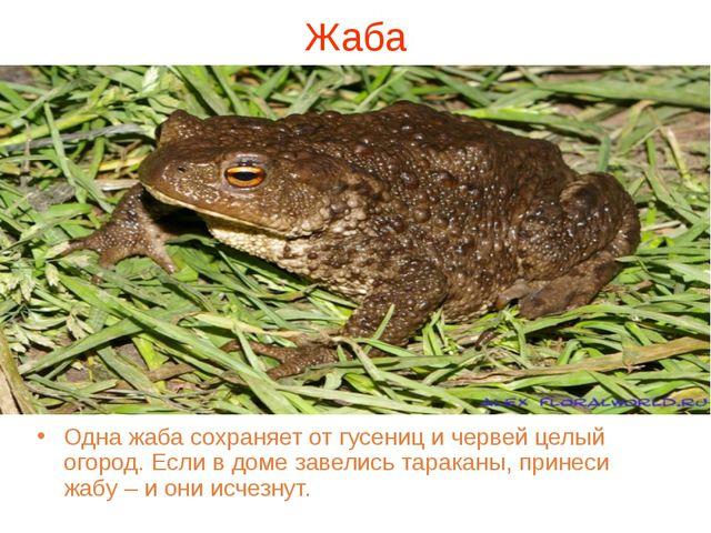 Жаба Одна жаба сохраняет от гусениц и червей целый огород. Если в доме завели...