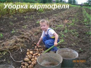Уборка картофеля Уборка картофеля
