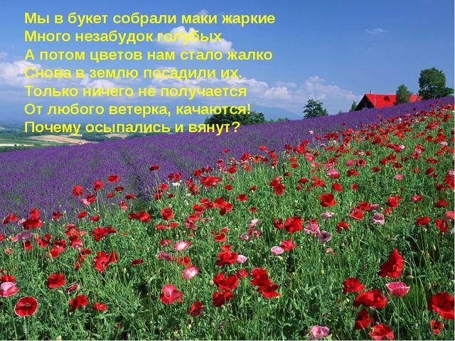 Мы в букет собрали маки жаркие Много незабудок голубых А потом цветов нам ста...