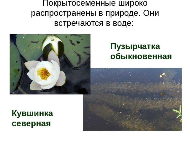 Покрытосеменные широко распространены в природе. Они встречаются в воде: Кувш...