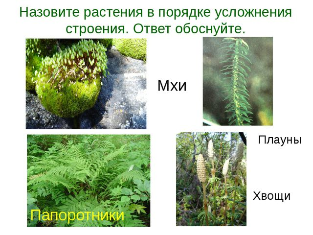 Назовите растения в порядке усложнения строения. Ответ обоснуйте. Папоротники...