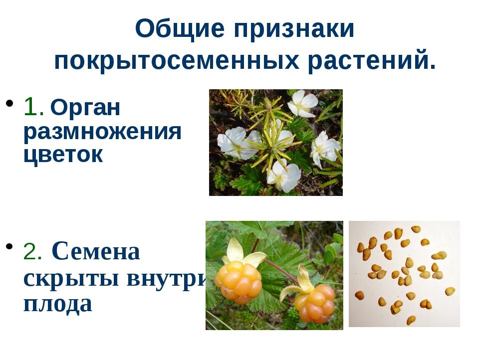 Общие признаки покрытосеменных растений. 1. Орган размножения цветок 2. Семен...
