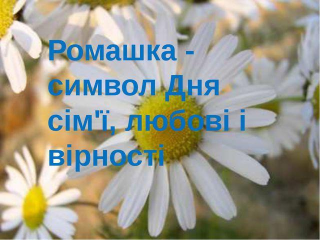 Ромашка - символ Дня сім'ї, любові і вірності
