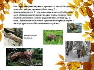 На территории парка встречаются около 50 видов млекопитающих, не менее 180 -
