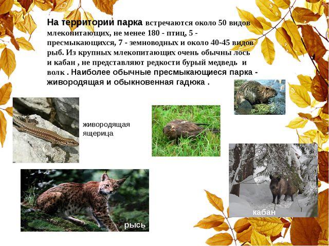 На территории парка встречаются около 50 видов млекопитающих, не менее 180 -...