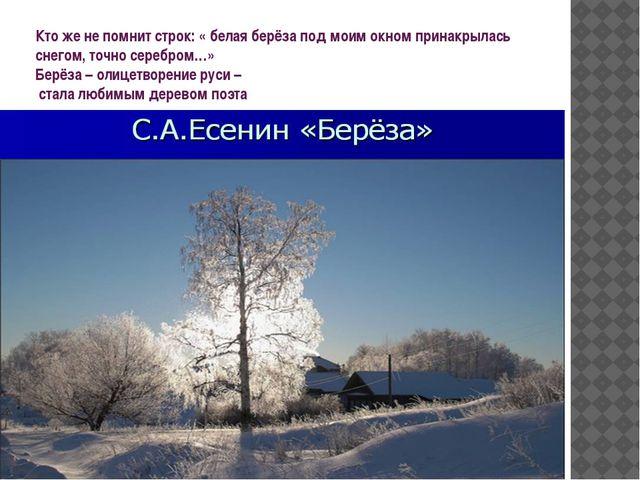 Кто же не помнит строк: « белая берёза под моим окном принакрылась снегом, то...