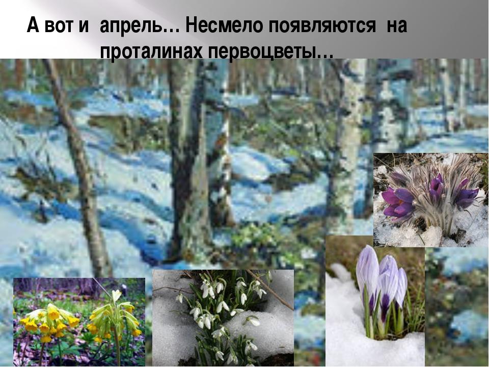 А вот и апрель… Несмело появляются на проталинах первоцветы…