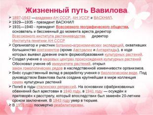 Жизненный путь Вавилова 1887-1943—академик АН СССР, АН УССР и ВАСХНИЛ. 1929—