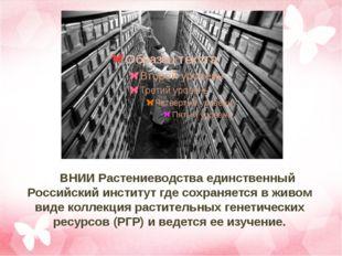 ВНИИ Растениеводства единственный Российский институт где сохраняется в жив