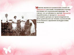 Вавилов является основателем учения об иммунитете растений, положившего начал