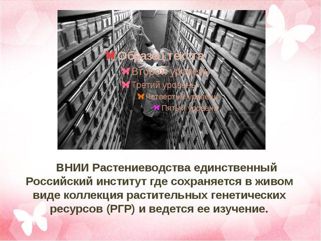 ВНИИ Растениеводства единственный Российский институт где сохраняется в жив...