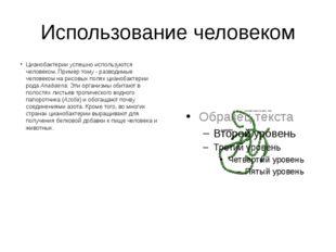 Использование человеком Цианобактерии успешно используются человеком. Пример
