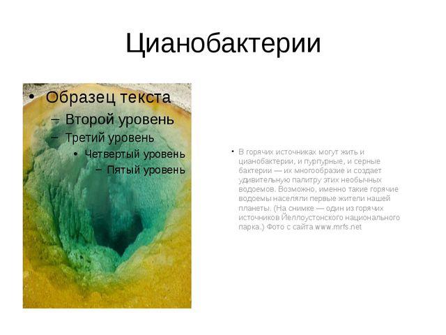 Цианобактерии В горячих источниках могут жить и цианобактерии, и пурпурные, и...