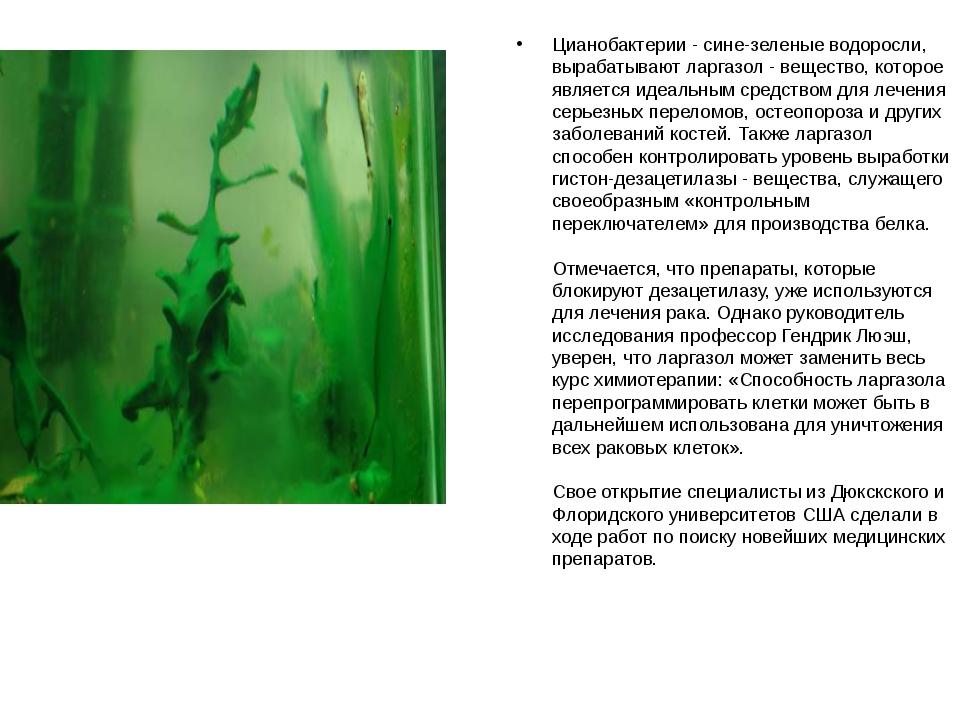Цианобактерии - сине-зеленые водоросли, вырабатывают ларгазол - вещество, кот...
