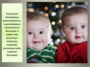 Различают однояйцевых (монозиготных) и разнояйцевых (дизиготных) близнецов,