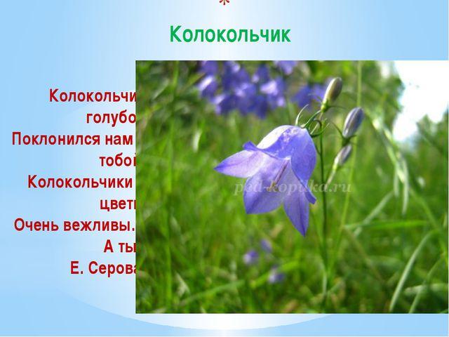 Колокольчик Колокольчик голубой Поклонился нам с тобой. Колокольчики – цветы...