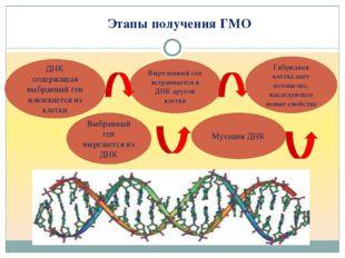 Этапы получения ГМО ДНК содержащая выбранный ген извлекается из клетки Выбра