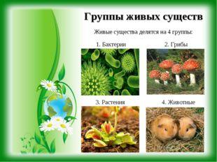 Группы живых существ Живые существа делятся на 4 группы: 1. Бактерии 2. Грибы