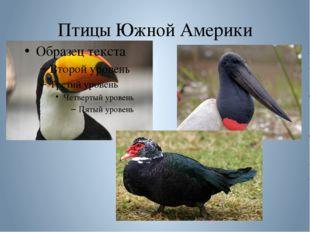 Птицы Южной Америки
