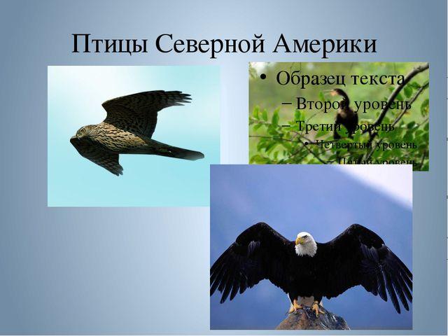 Птицы Северной Америки