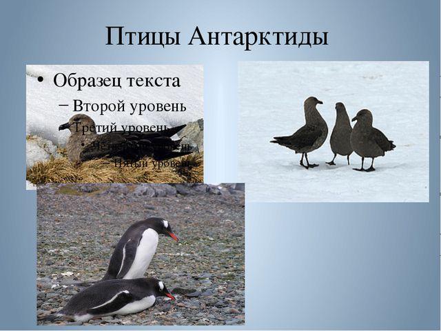 Птицы Антарктиды