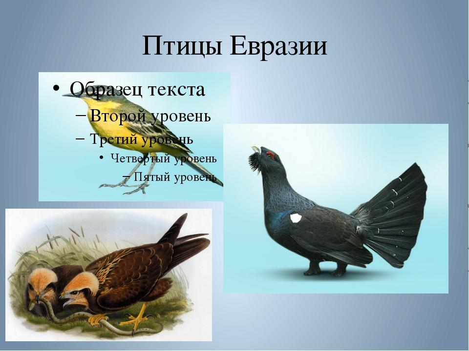 Птицы Евразии