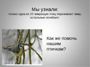 Мы узнали: только одна из 10 зимующих птиц переживает зиму, остальные погибаю