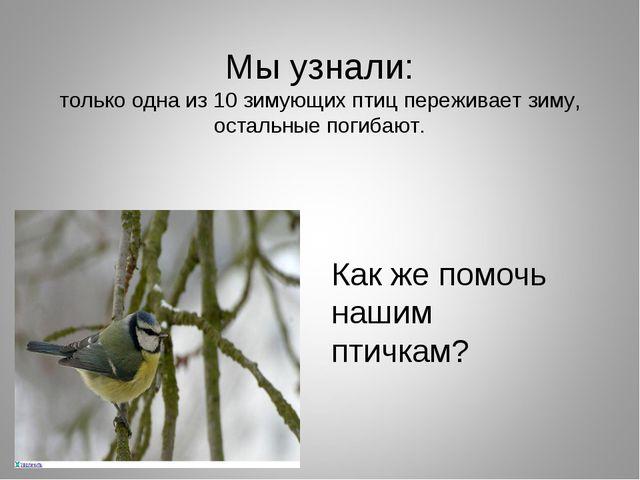 Мы узнали: только одна из 10 зимующих птиц переживает зиму, остальные погибаю...