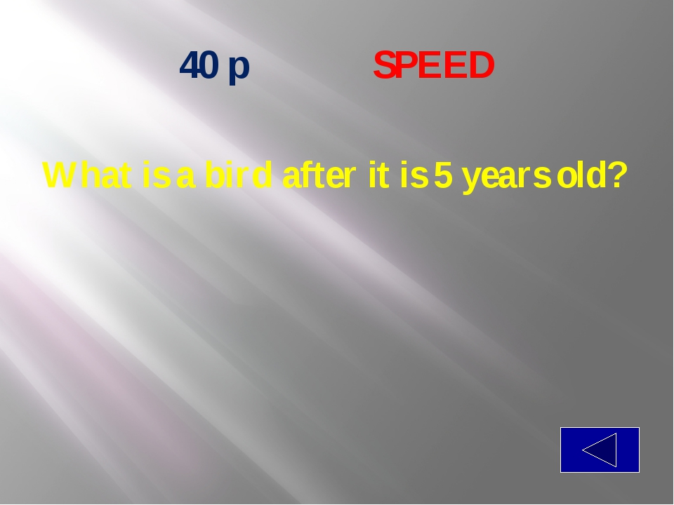 50 p  SPEED If you have it, you want to share it. If you share it, you do n...