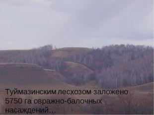 Туймазинским лесхозом заложено 5750 га овражно-балочных насаждений…