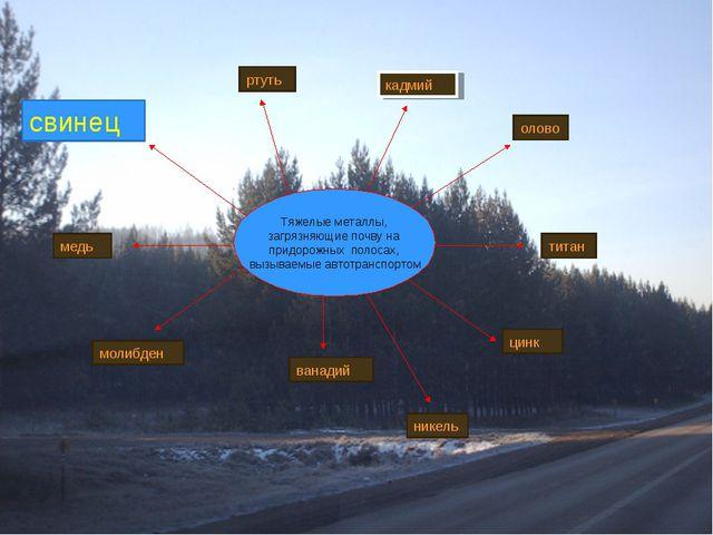 Тяжелые металлы, загрязняющие почву на придорожных полосах, вызываемые автотр...