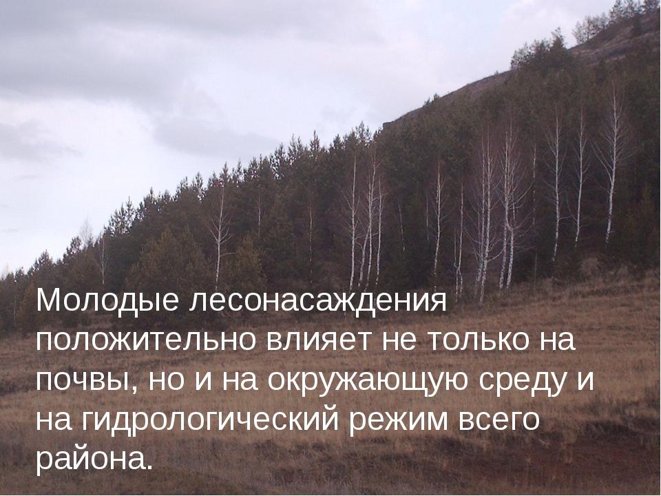 Молодые лесонасаждения положительно влияет не только на почвы, но и на окружа...