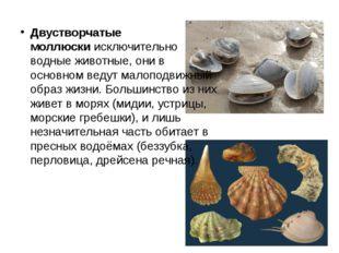 Двустворчатые моллюскиисключительно водные животные, они в основном ведут ма