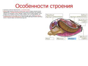 Особенности строения Характерная особенность Двустворчатых— отсутствие голов