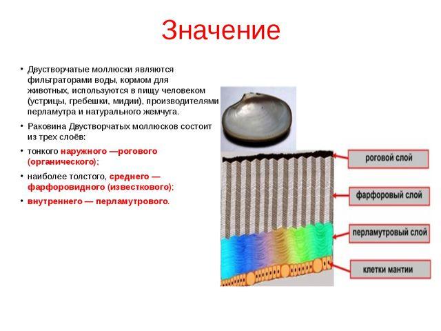 Значение Двустворчатые моллюскиявляются фильтраторами воды, кормом для живот...