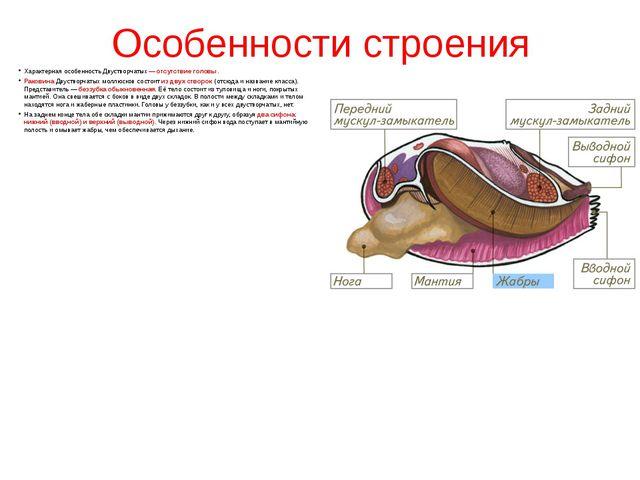 Особенности строения Характерная особенность Двустворчатых— отсутствие голов...