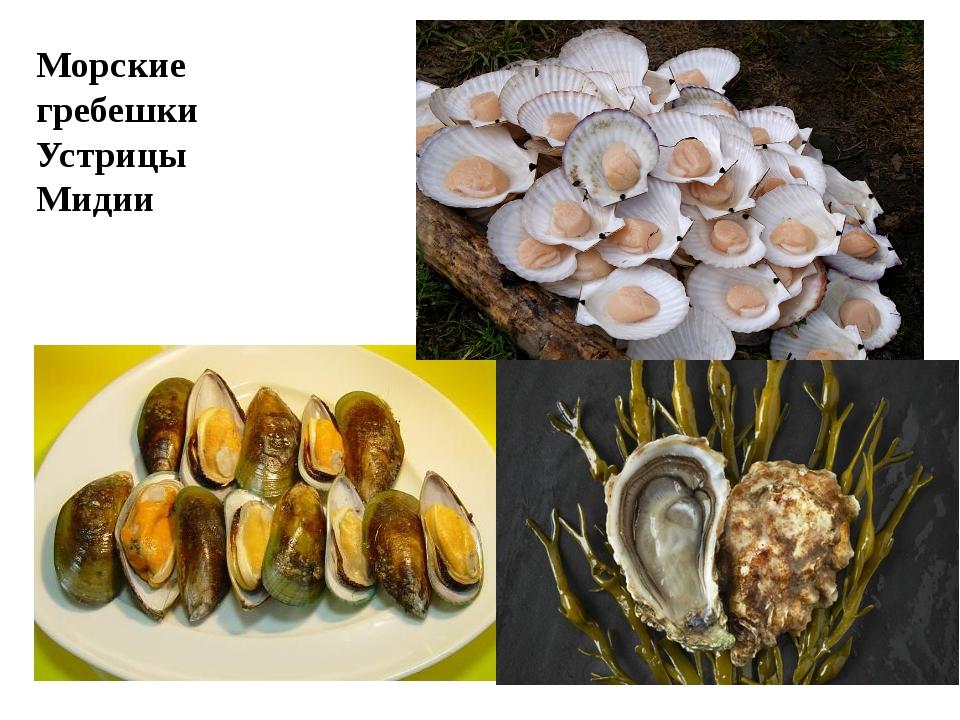 Морские гребешки Устрицы Мидии