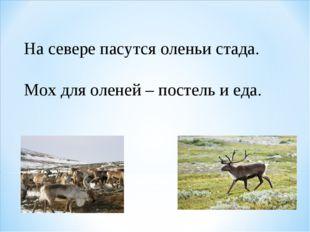 На севере пасутся оленьи стада. Мох для оленей – постель и еда.