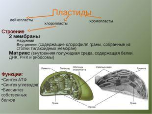 Строение 2 мембраны Наружная Внутренняя (содержащие хлорофилл граны, собранны