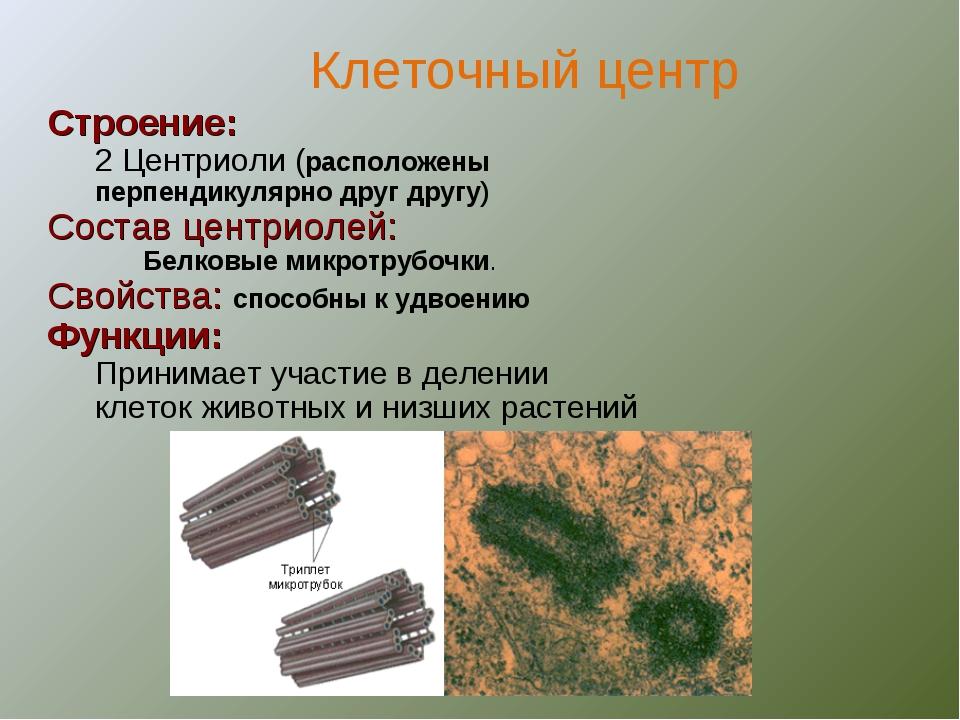 Строение: 2 Центриоли (расположены перпендикулярно друг другу) Состав центрио...