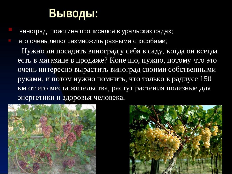 Выводы: виноград, поистине прописался в уральских садах; его очень легко разм...